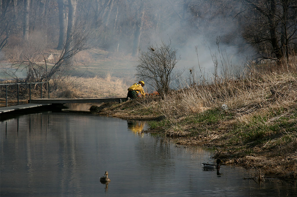 controlled burn at the pond